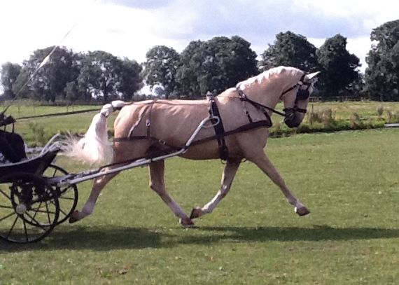 The Fei Has Allocated The World Para Equestrian Driving